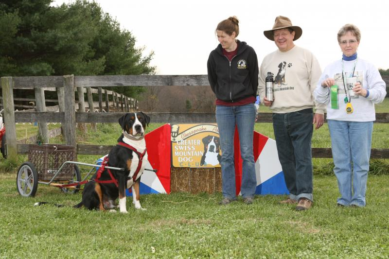Greater swiss mountain dog pulling - photo#27